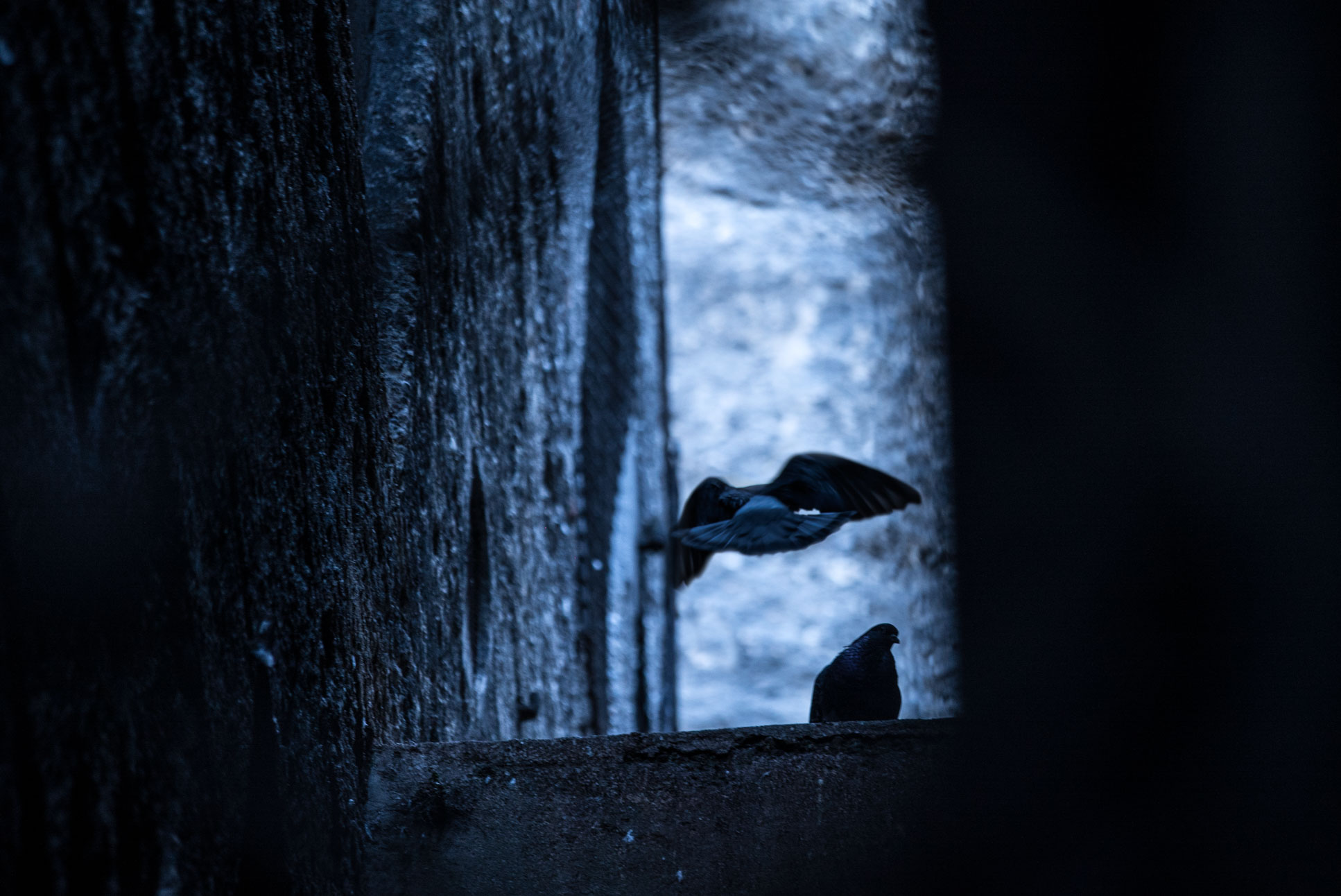 Photo by Pascal Sommer - BIRBS