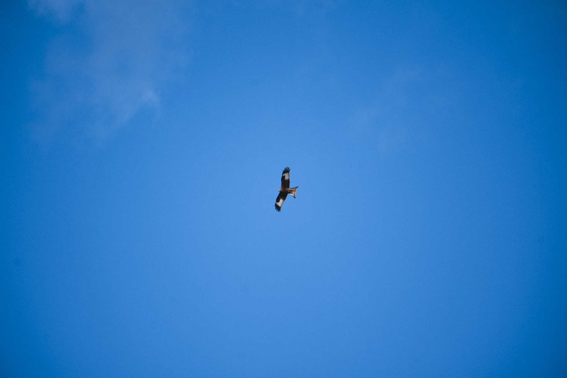 Photo by Pascal Sommer - Probably not the same bird I saw there last time (post #post119#), but you never know..