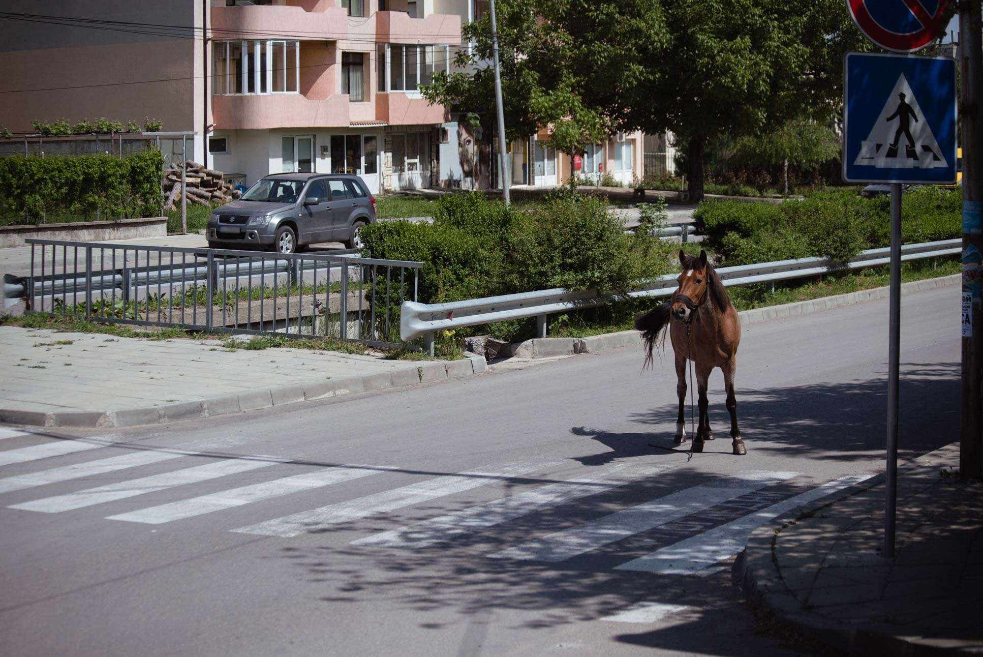 A horse doing its horse things on the main road.