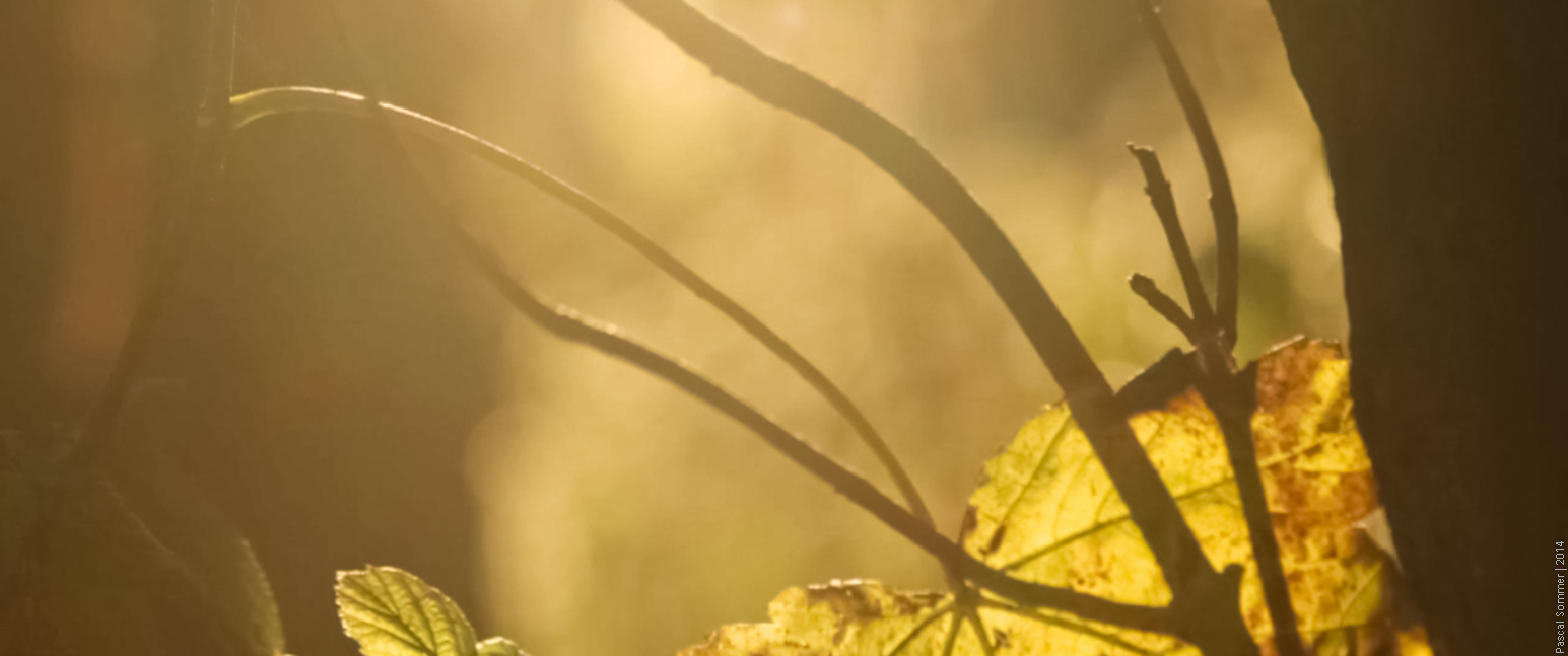 "A still frame from our short movie ""Memoria"""