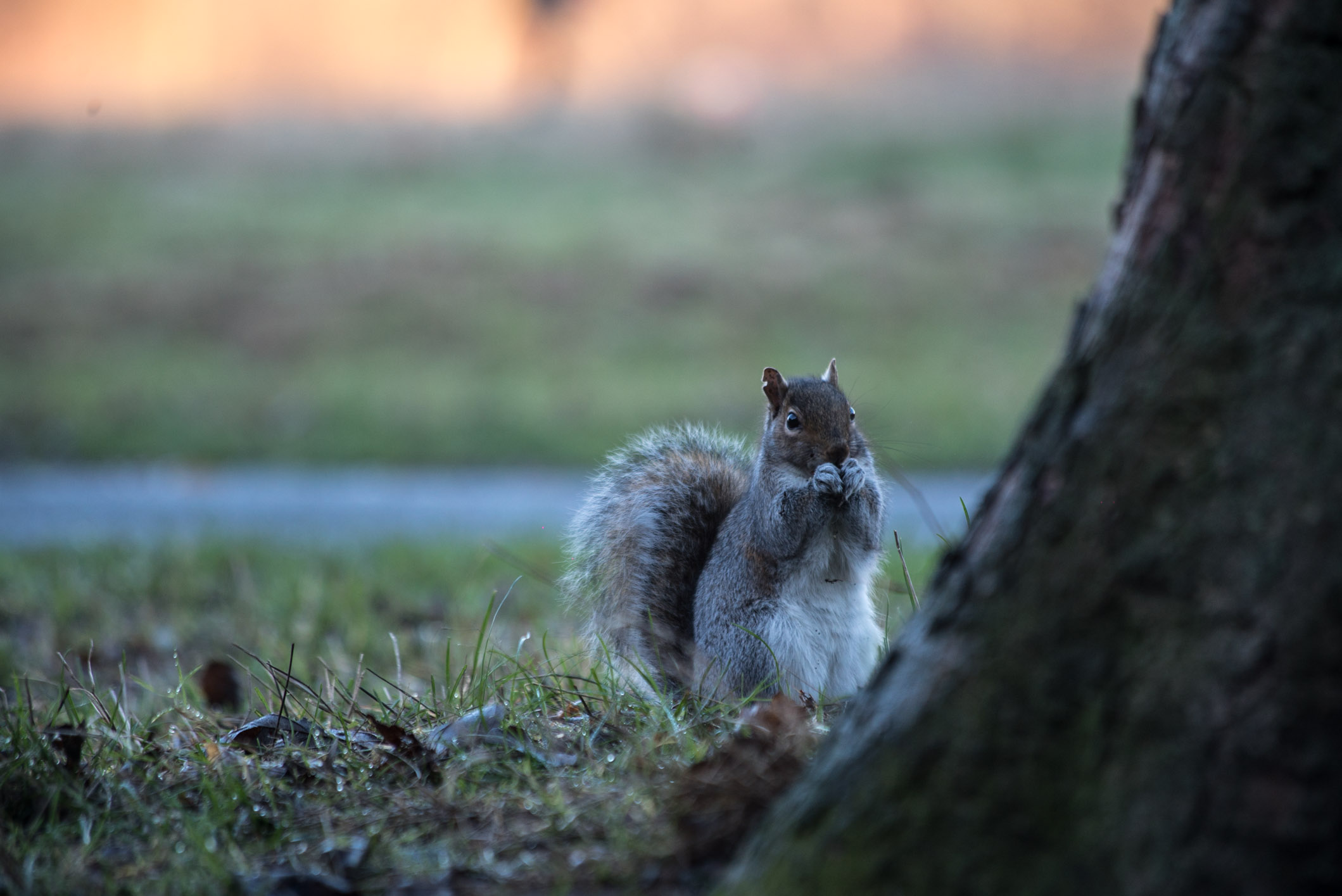 Photo by Pascal Sommer - A squirrel in Greenwich park