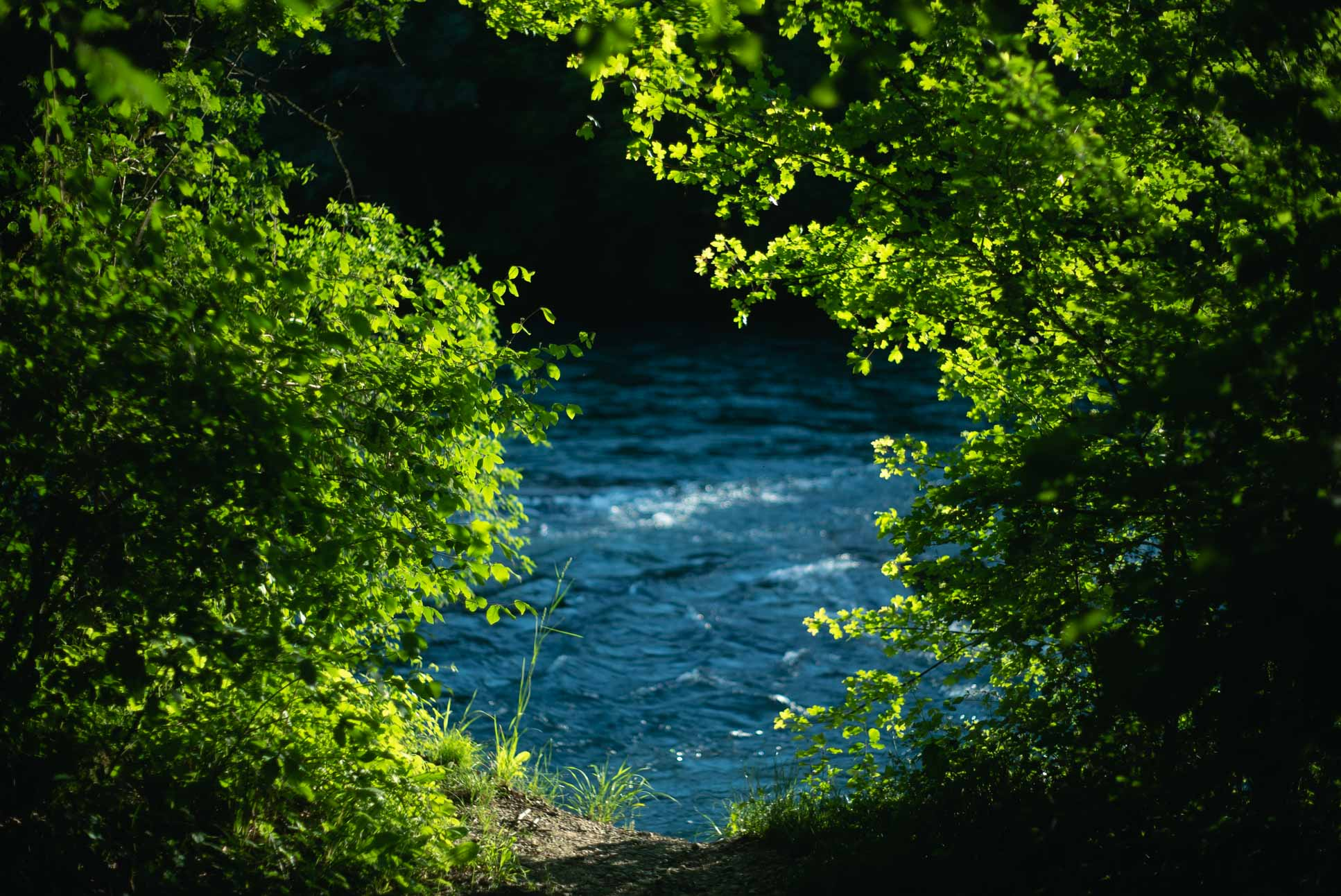 Aare with the surrounding trees shining bright as always.
