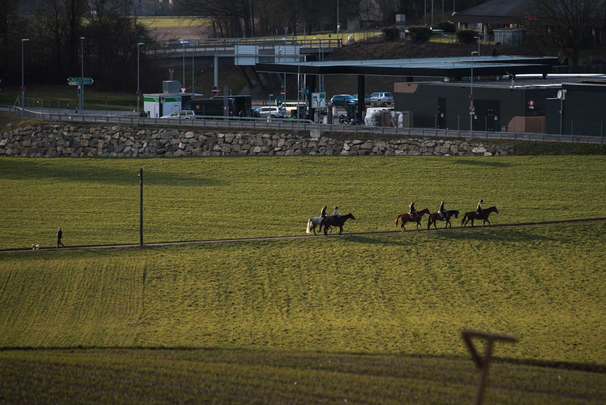 Photo by Pascal Sommer - Horses headed for the highway