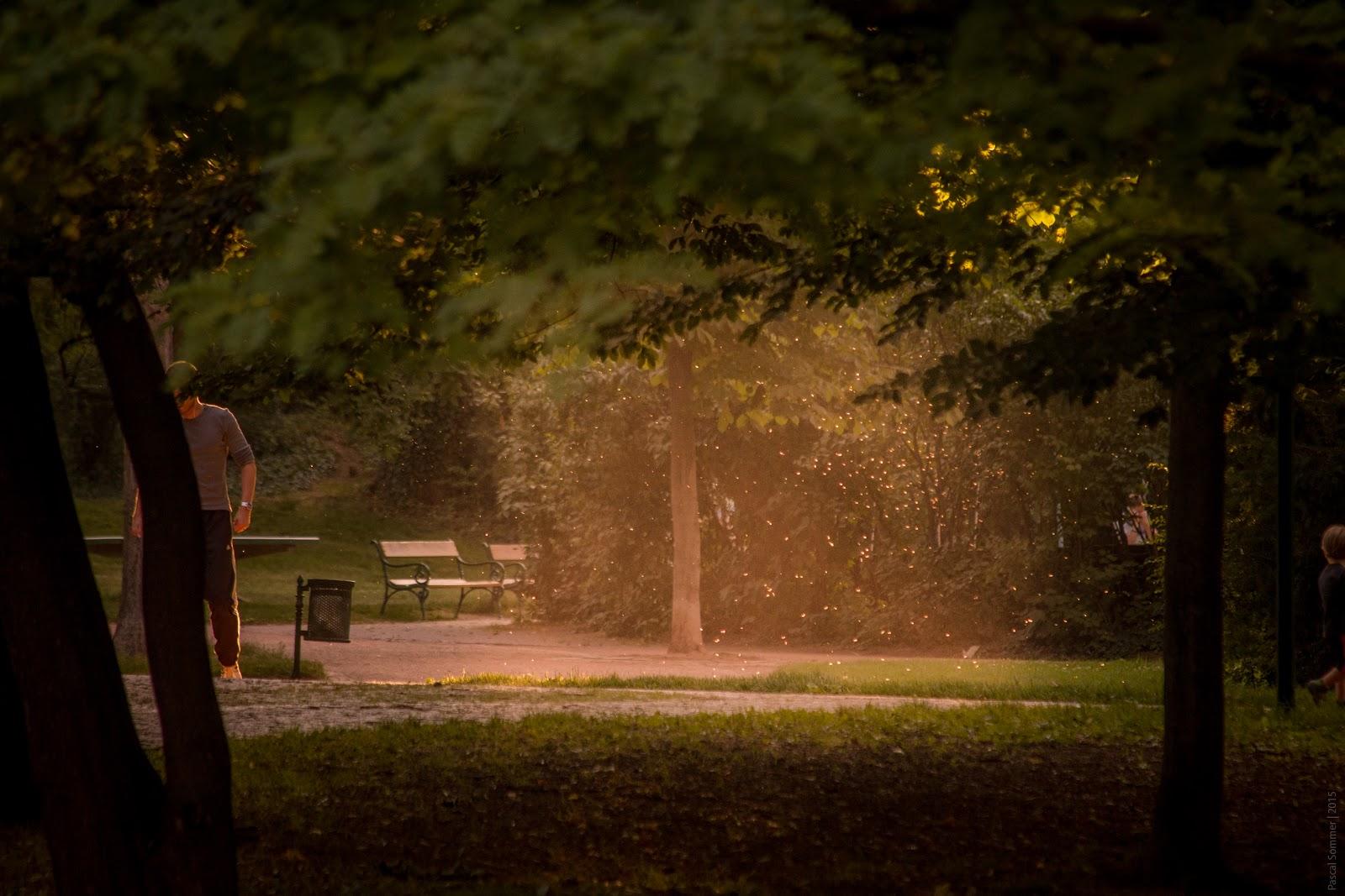 In a park in Brno, Czechia