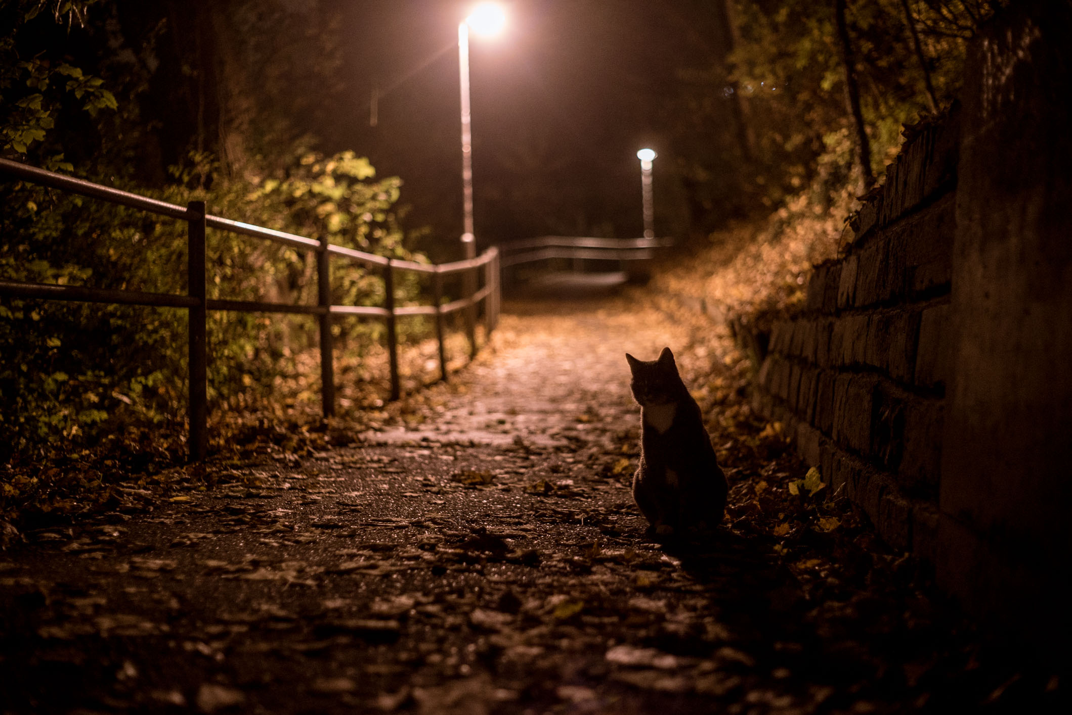 This cat followed me for at least 300 metres, but it took me a while to get it to stop in the right place for this picture